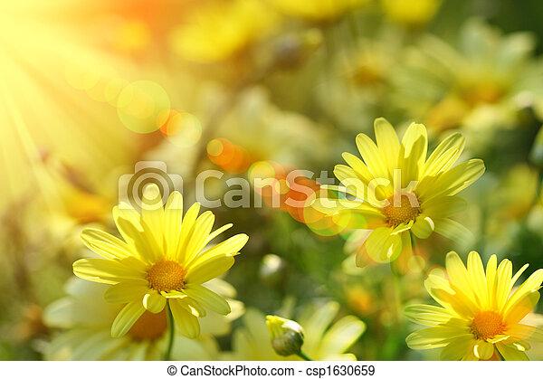 meleg, küllők, closeup, óriási sajtkorongok, sárga - csp1630659