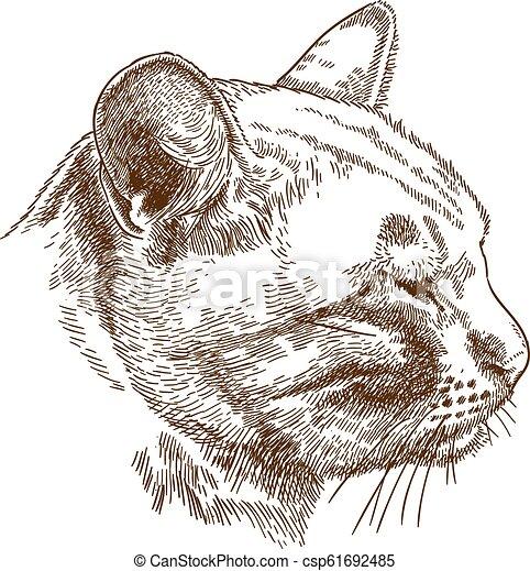metszés, fej, ábra, macska - csp61692485