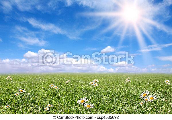 mező, eredet, napos, derült, kaszáló - csp4585692