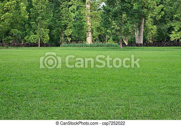 mező fű, bitófák - csp7252022