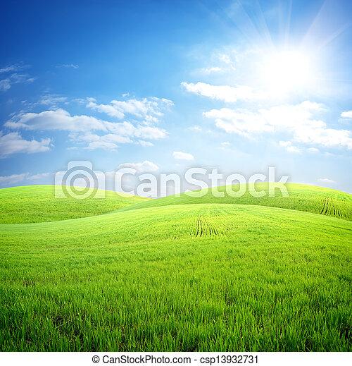 mező fű, friss - csp13932731