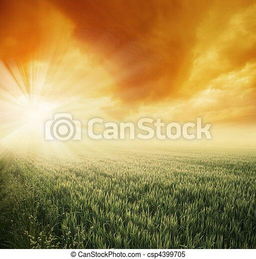 mező, napos, reggel - csp4399705