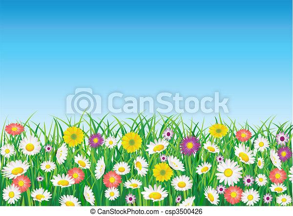 mező, virág - csp3500426