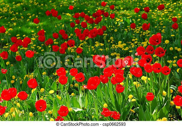 mező, virág - csp0662593