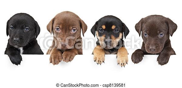 négy, felül, kutyus, transzparens - csp8139581
