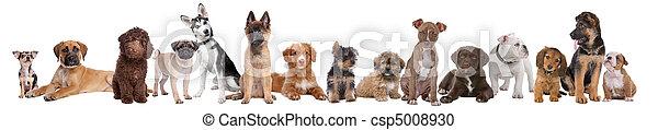 nagy, kutyus, csoport - csp5008930