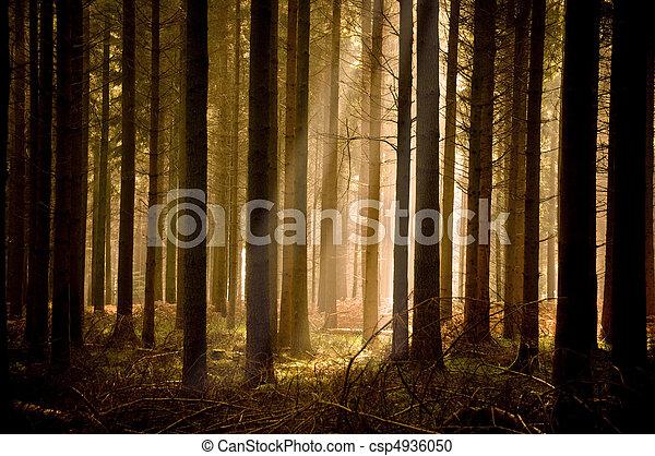 napsugarak, meleg, át, erdő - csp4936050