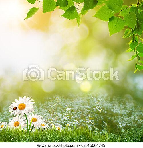 nyár, kaszáló, természetes szépség, elvont, nap, táj - csp15064749