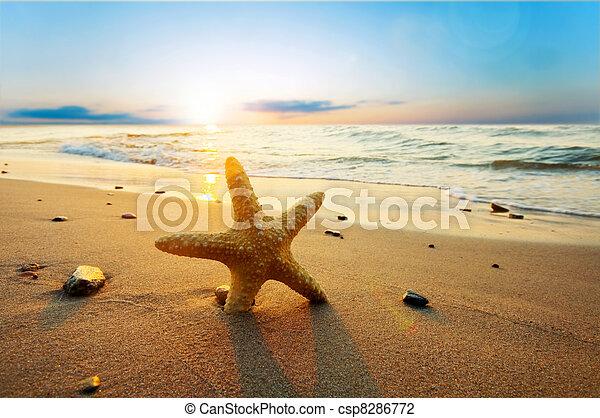 nyár, tengerpart, napos, tengeri csillag - csp8286772