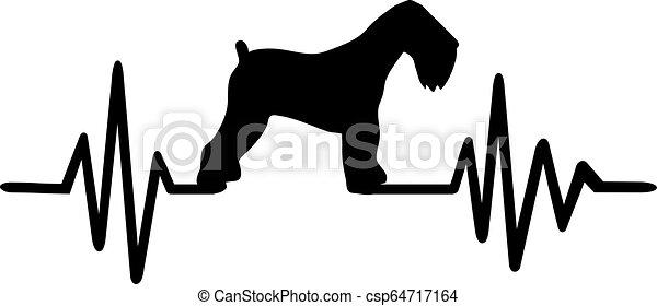 orosz, fekete, terrier, szívdobbanás - csp64717164