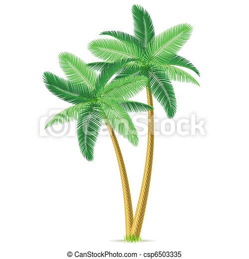 pálma, tropikus, bitófák - csp6503335