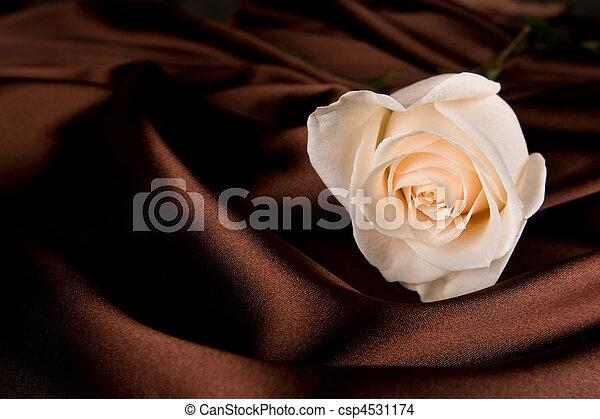 rózsa, fehér, selyem, barna - csp4531174