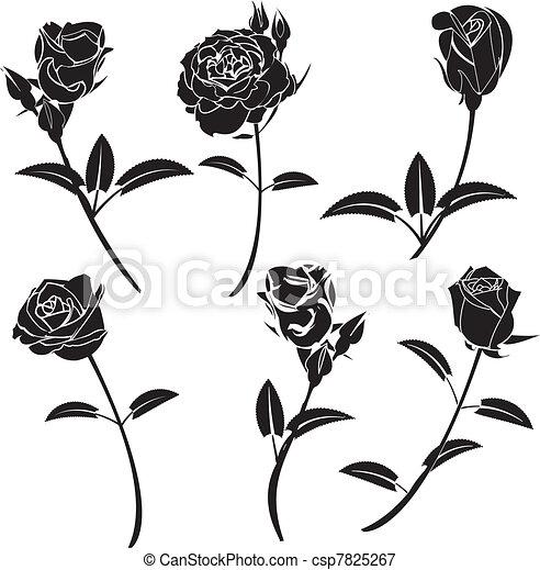 rózsa, virág - csp7825267