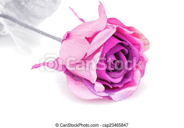 rózsaszínű rózsa - csp23465847