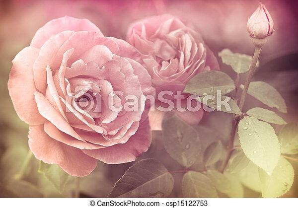 rózsaszínű virág, romantikus, elvont, víz, agancsrózsák, savanyúcukorka - csp15122753