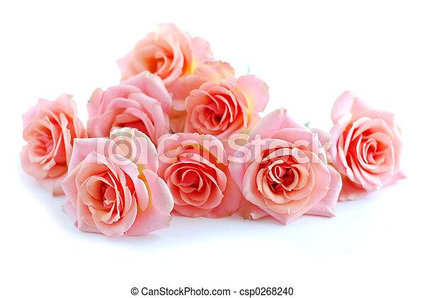 rózsaszín rózsa, fehér - csp0268240