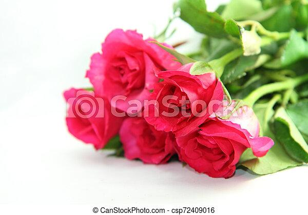 rózsaszín rózsa - csp72409016