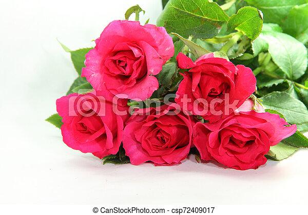 rózsaszín rózsa - csp72409017
