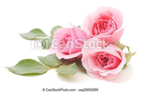 rózsaszín rózsa - csp22652695