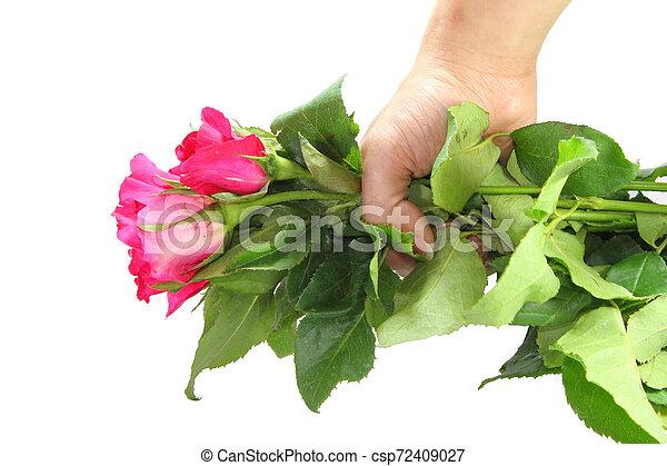 rózsaszín rózsa - csp72409027