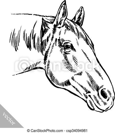 rajzol, bevés, ló, ábra, tinta - csp34094981