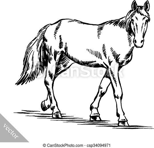 rajzol, bevés, ló, ábra, tinta - csp34094971