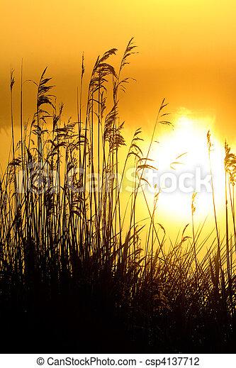 reggel, tó, napkelte, harmat - csp4137712