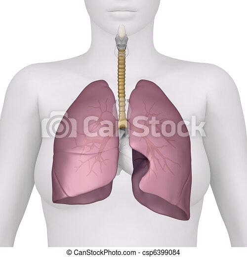 rendszer, légzési, kilátás, női, előbbi, anatómia - csp6399084