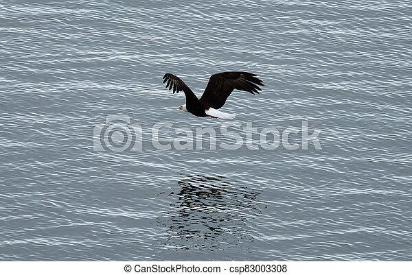 sas, felül, kopasz, menekülés, tenger - csp83003308
