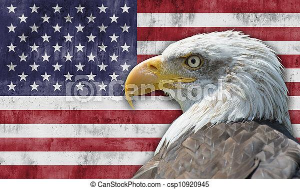 sas, kopasz, american lobogó - csp10920945