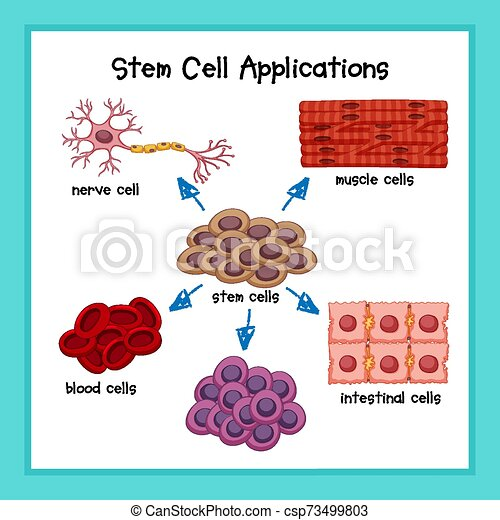 sejt, tudományos, szár, alkalmazásokat, ábra orvosi - csp73499803