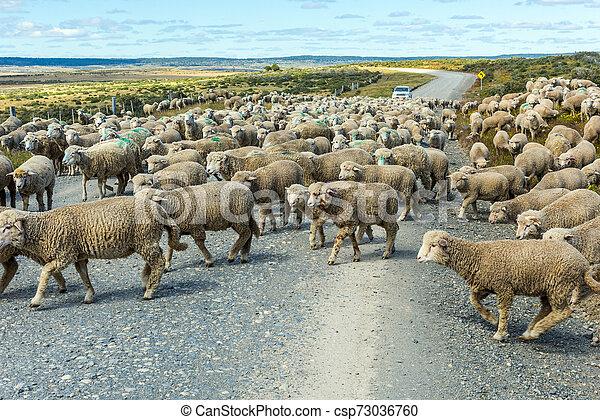sheep, fuego, del, tierra, csorda, út - csp73036760