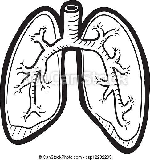 skicc, tüdő, emberi - csp12202205