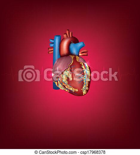 szív, háttér, orvosi ábra, fényes, emberi, piros - csp17968378