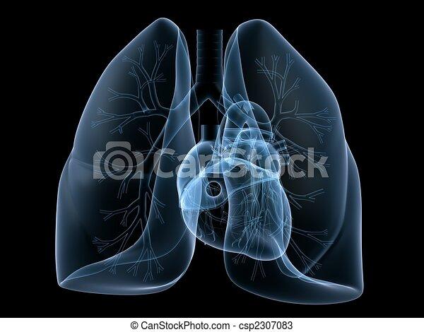 szív, tüdő, röntgen - csp2307083