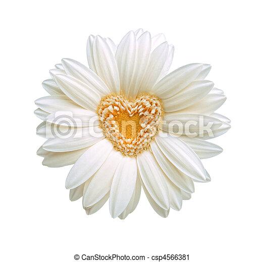 szív, virág - csp4566381