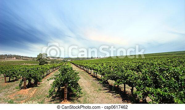 szőlőskert, tiszta égbolt - csp0617462
