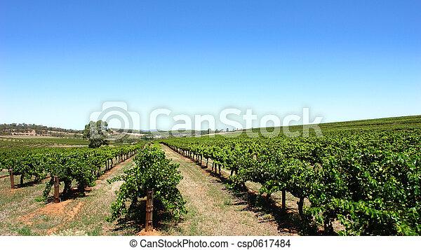 szőlőskert, tiszta égbolt - csp0617484