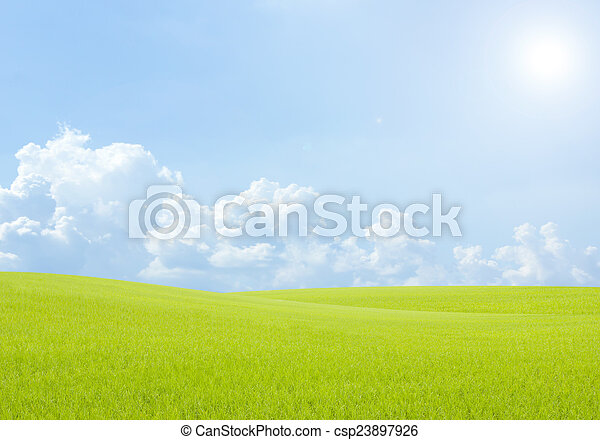 táj, mező, háttér, ég felhő, blue zöld, rizs, fű - csp23897926