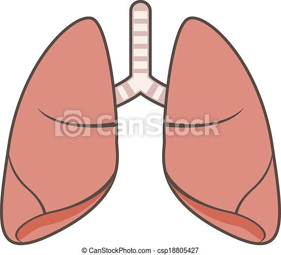 tüdő - csp18805427