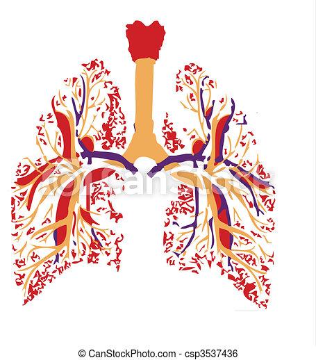 tüdő - csp3537436