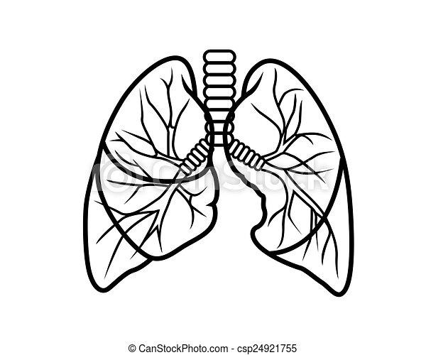 tüdő - csp24921755