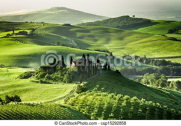 tanya, olajbogyó, szőlőskert, berkek - csp15292858
