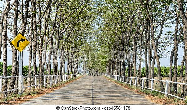 tanya, vonalazott, fa, út - csp45581178