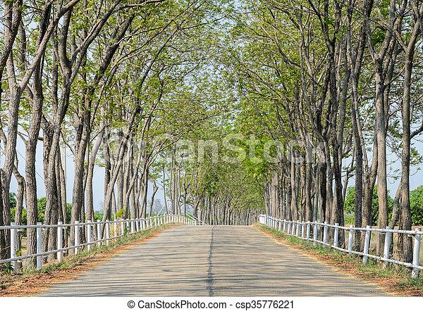 tanya, vonalazott, fa, út - csp35776221