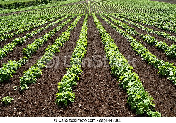 tanya, zöld növényi, megvonalaz, field. - csp1443365