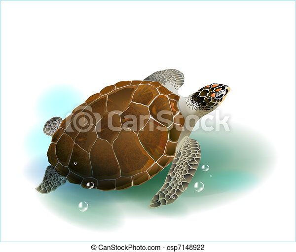 tenger, úszás, tengeri teknős, óceán - csp7148922