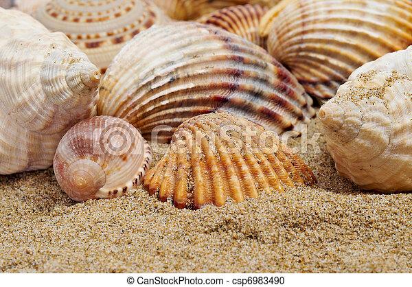 a kéthéjú kagylók parazitái férgek taknyot okoznak