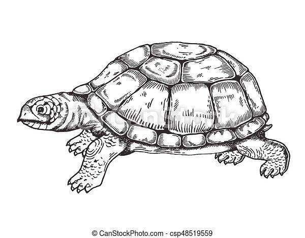 tengeri teknős, metszés, vektor, mód - csp48519559