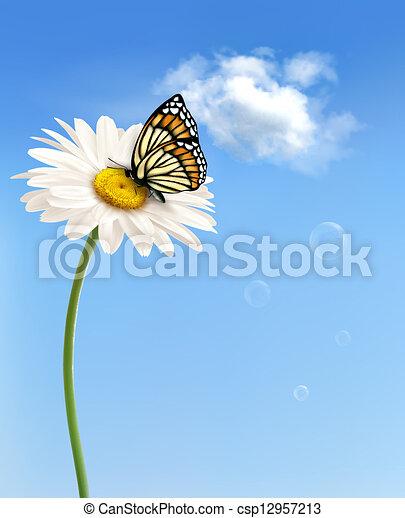 természet, butterfly., vektor, eredet, százszorszép, virág, illustration. - csp12957213